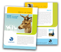 Brochure Templates wild life parks