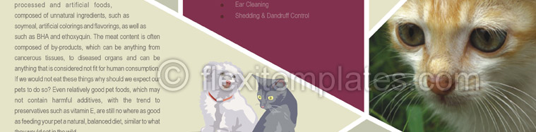 Actual Brochure  Design For Pet Care Services